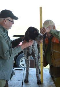 judges measure dog