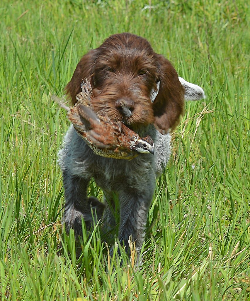 Training Day Puppy DSC_4859