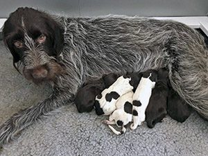 Arika nursing pups