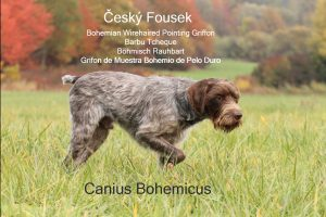 Canis Bohemicus Cesky Fousek image with alternate breed names