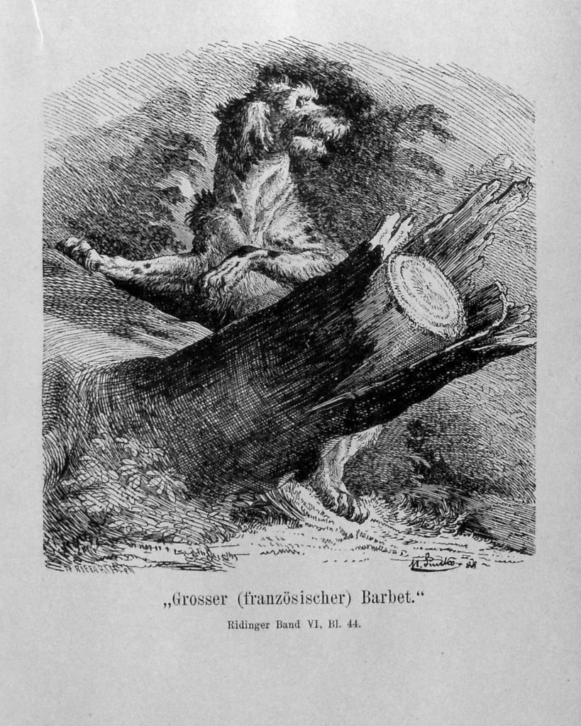 Historical print of rough-coated hunting dog